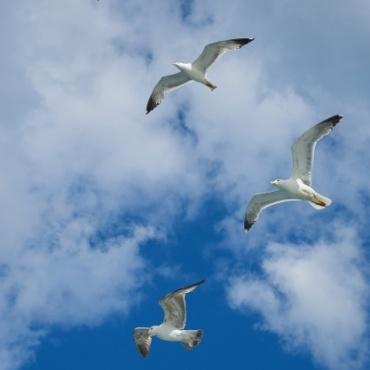 Learning to fly – Progetto sperimentale di avviamento alla vita indipendente